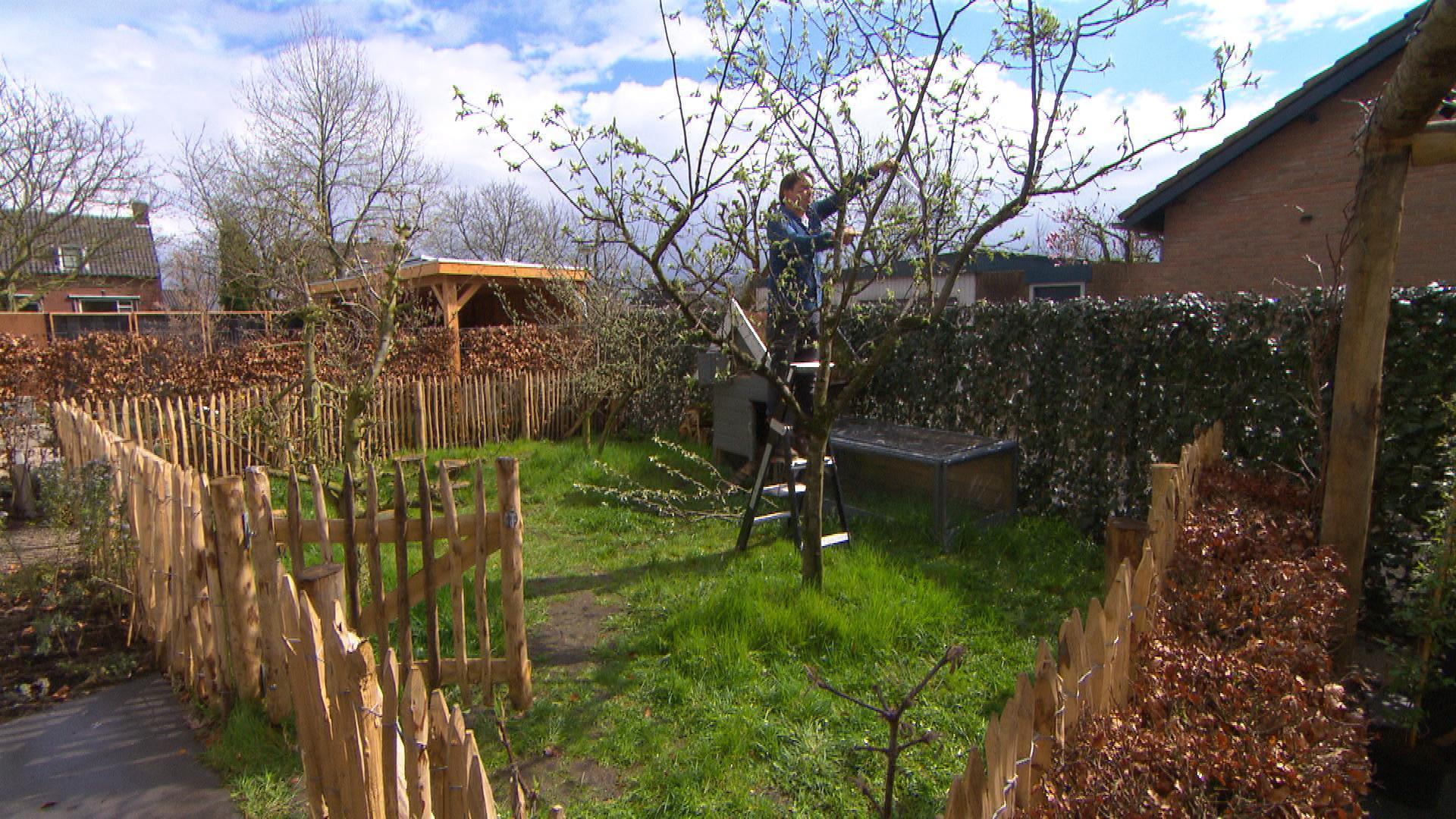 Eigen huis en tuin snoeien en beveiligen i praxis blog for Tuin praxis
