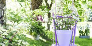 Tuinplant van de maand juli: de pluimhortensia